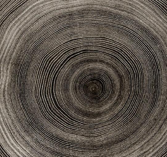 vita del legno