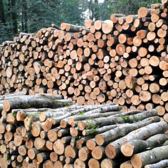 legno da tagliare